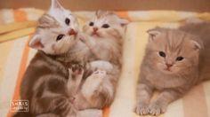[Cat's daily] 우리 같이 놀아요2  playing cat