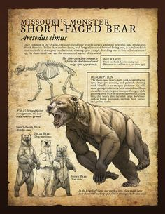 Design and Illustration for Pleistocene (Ice Age) specimens and fossils, natural history museum signage. Prehistoric World, Prehistoric Creatures, Mythological Creatures, Fantasy Creatures, Mythical Creatures, Short Faced Bear, Extinct Animals, Creature Concept, History Museum