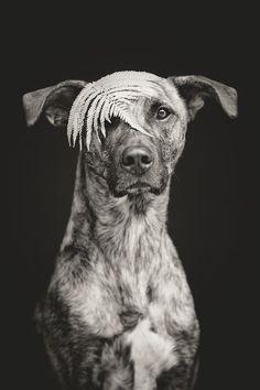 Fernyolee by Elke Vogelsang on 500px