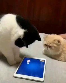 Funny Cute Cats, Funny Animal Jokes, Cute Baby Cats, Funny Cats And Dogs, Cute Cat Gif, Cute Little Animals, Funny Cat Videos, Cute Cats And Kittens, Cute Funny Animals