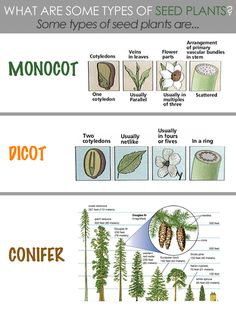 Classical Conversations: Cycle 1 Week 8-Science: What are some types of Seed Plants?