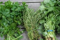 Growing your own herbs.....