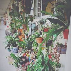 31 Best Orchid Display Ideas Images Orchids Plants