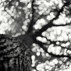 Trees Of Life II by ~cameraflou