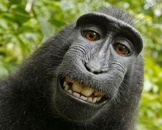 Award winning photographer David Slater left his camera unattended while visiting a national park in North Sulawesi, Indonesia and it attracted the attention of a curious female Crested Black Macaque monkey.    She became enthralled by her reflection on the camera lens and managed to take a picture of herself.