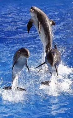 Three Beautiful Dolphins !!