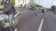WebBuzz du 23/03/2016: Des motards sauvent un chien en bloquant une autoroute-Bikers Save Dog on busy highway  Un chien paniqué courant sur une autoroute surchargé est sauvé par des motards  http://www.noemiconcept.com/index.php/fr/departement-informatique/webbuzz-tech-info/207220-webbuzz-du-23-03-2016-des-motards-sauvent-un-chien-en-bloquant-une-autoroute-bikers-save-dog-on-busy-highway.html#video