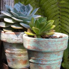 Aged pots with succulents