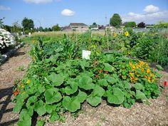 Ladner Community Garden: Harvest Time for the Needy