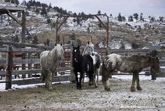 Wild Horses: The Adobe Town Horses Arrive at Black Hills Wild Horse Sanctuary