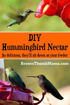 This easy hummingbird food recipe uses only two ingredients and is ready in minutes. Includes important tips on what you should NEVER feed to hummingbirds! Make Hummingbird Food, Hummingbird Nectar, Hummingbird Garden, How To Attract Hummingbirds, How To Attract Birds, Humming Bird Feeders, Humming Birds, Bird House Kits, Easy Coffee