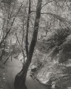 Footpath in the Siebengebirge Mountains; August Sander (German, 1876 - 1964)…