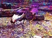 """New artwork for sale! - """" Grey Crowned Crane Cranes Bird  by PixBreak Art """" - http://ift.tt/2uVjtKn"""