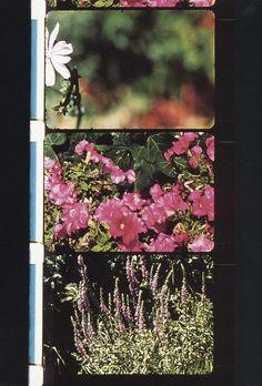 Rose Lowder, L'œuvre Bouquets 1 à 10 - Centre Pompidou
