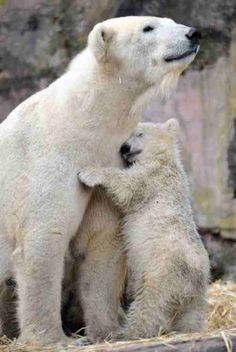 Hands down, the best animals alive are polar bears.