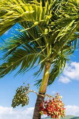Berries Under Palm Fronds