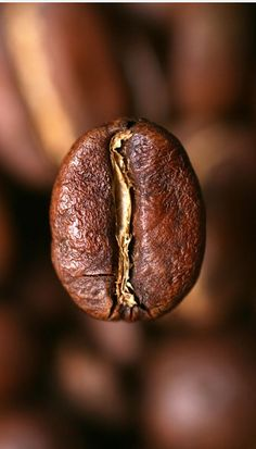Espresso Coffee Beans Are Not Some Special Beans - CoffeeLoverGuide Coffee Talk, I Love Coffee, Coffee Break, My Coffee, Coffee Shop, Coffee Cups, Brown Coffee, Morning Coffee, Barista