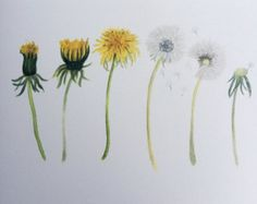 Items similar to Minimal Dandelion Custom Painting 24 x 36 Perfect wall art for nursery on Etsy - You are in the right place about Items similar to Minimal Dandelion Custom Painting 24 x 36 Perfect - Dandelion Drawing, Dandelion Flower, Watercolor Print, Watercolor Flowers, Biblical Tattoos, Hanya Tattoo, Mommy Tattoos, Glyph Tattoo, Art Mural