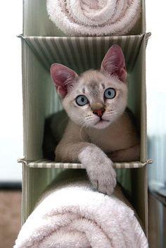 cat in a box    so, so cute!!!!!!!
