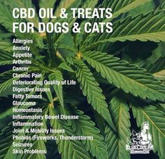 CBD oil is also highly beneficial for your pets!! Extend the life span of your animal, and keep them pain free too!!!! www.hempworx.com/DebsChoices
