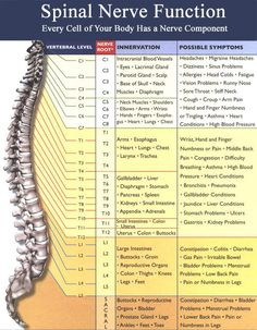 Spinal Nerve Chart - L4, pain in hips, numbness in legs and foot, weakness in legs http://whymattress.com/how-to-choose-the-best-mattress-for-back-pain/