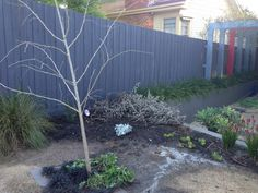 Sep15: this is the garden bed I destroyed by over-pruning....