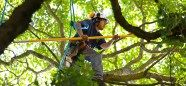Eddy's Tree Service, here we offers Tree Trimming & Pruning along with Lot Clearing service at reasonable rates and many more services are available at Lake Forest. Quick Quotes, Choose The Right, Lake Forest, Garden Tools, How To Remove, Yard Tools, Outdoor Power Equipment
