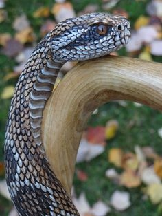 Hand carved rattlesnake walking cane, by Mike Stinnett