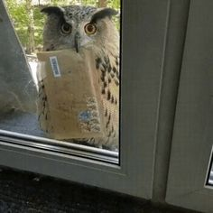 """""""My Hogwarts acceptance letter FINALLY arrived! Hogwarts Acceptance Letter, Hogwarts Letter, Cute Funny Animals, Funny Cute, Cute Animal Gif, Cute Animal Videos, Cute Gif, Hilarious, Beautiful Birds"""