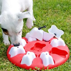 5 Ways to Keep Your Dog Occupied On a Sick Day. Brain Games For Dogs, Ludo, 1000 Gifts, Best Dog Toys, Interactive Toys, Puzzle Toys, Dog Carrier, Dog Behavior, Dog Accessories