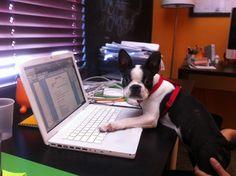 Nuestro empleado Chuy trabajando.
