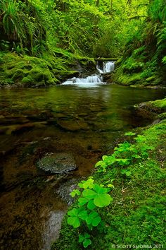 Tranquility - A tranquil intimate scene from deep in the Columbia River Gorge of Washington