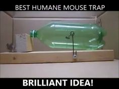 Do You Share Your House With A Mouse With A House?