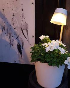 Oeh het is alweer de langste avond. Lekker nog ff buiten zitten. Met dit leuke solar lampje.  Fijne avond allemaal! #elho #myelho #gardeninspiration #homedetails #dreamcatcher #flowers #solar #whitedetails #garden #kijkjeindetuin #wednesday #evening #interior4all | Content shared via elho Inspiration Gallery