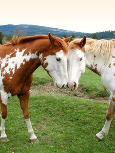 just one horsehug a day can be a powerful tool in gaining perspective on your happiness