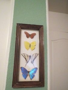 mounted butterflies - fakes only. For the bathroom.