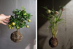 DIY gardens - Google Search