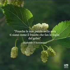 Frase Gabriele D'Annunzio