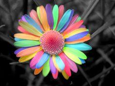 rengarenk yapraklar
