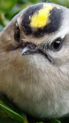 bird, head, unusual, grass