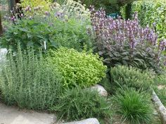 giardino delle erbe - Szukaj w Google