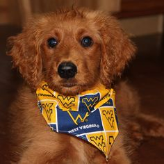 Cash! He loves all things WV including watching WVU sports in his favorite bandanna, playing in the WV snow in Mannington, & kayaking the Buffalo Creek in Mannington, WV #WestFurginia