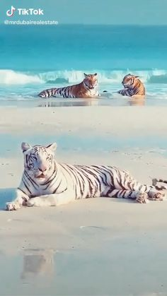 Cute Animal Photos, Cute Animal Videos, Animal Pictures, Funny Cute Cats, Cute Funny Animals, Cute Dogs, Cute Wild Animals, Cute Little Animals, Nature Animals