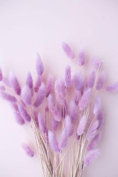 Lavender Aesthetic, Purple Aesthetic, Flower Aesthetic, Purple Wallpaper Iphone, Flower Phone Wallpaper, Walpapers Iphone, Bunny Tail, Photo Wall Collage, Flower Backgrounds