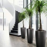 a good way to have plants indoors without cluttering