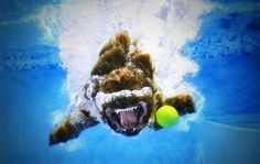 Underwater dog photography! I love these puppies