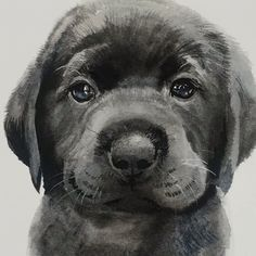 Black Lab Puppy Watercolor Time Lapse Video This sweet black Labrador Retriever Puppy was painted on a block of Fabriano Artistico cold pressed paper using black and ultramarine watercolors and Richeson brushes. Schwarzer Labrador Retriever, Black Labrador Retriever, Retriever Puppy, Labrador Puppies, Pug Dogs, Animal Paintings, Animal Drawings, Art Drawings, Drawings Of Dogs