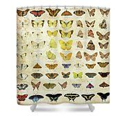 Shower curtain, butterflies,butterfly, names,american species, identify, identification, collection, decoration,vintage
