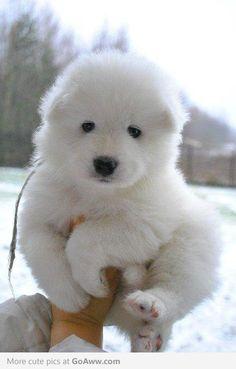 snow pup :)