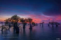 Dancing Tree by AntonRaharja. @go4fotos